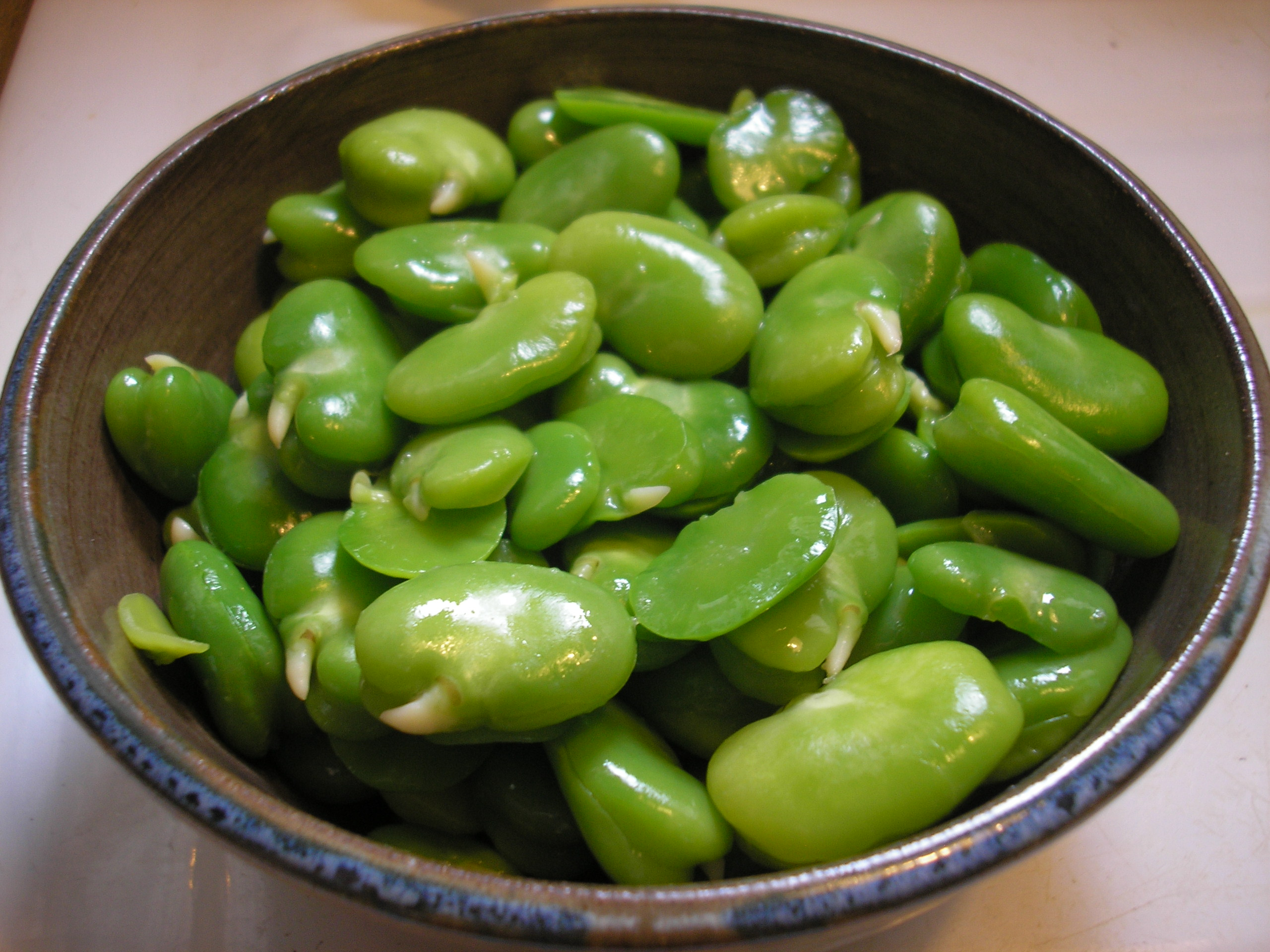 How to cook fava beans fairview gardens harvest shares for How to cook fresh lima beans from garden